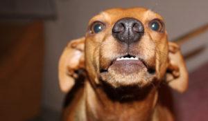 Hundetraining in der Hundeschule Zufriedene Hunde