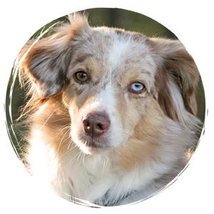 Hundetraining in der Hundeschule Zufriedene Hunde in Kleve
