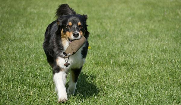 Dummytraining bei Zufriedene Hunde