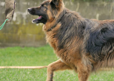 Futterbeuteltraining bei Zufriedene Hunde