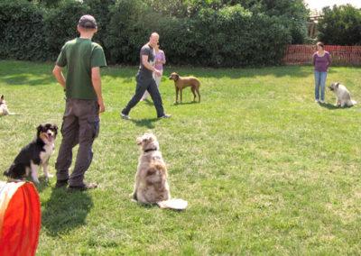 Gruppentraining für erwachsene Hunde