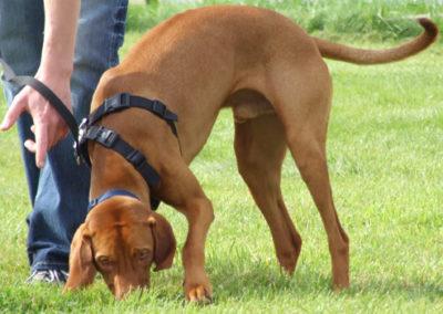 Nasenarbeit und Fährtentraining in der Hundeschule Zufriedene Hunde