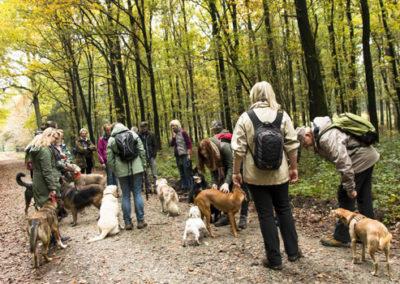 Hundewanderung mit der Hundeschule Zufriedene Hunde