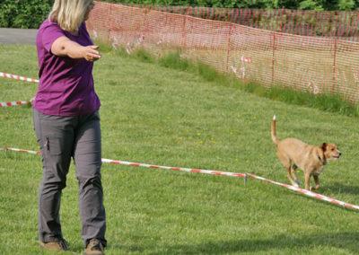 Körpersprachliches Longieren in der Hundeschule Zufriedene Hunde