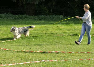 Körpersprachliches Longieren in der Hundeschule