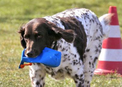Apportiertraining, Dummytraining, Futterbeuteltraining in der Hundeschule in Emmerich, Kleve, Rees, Kalkar