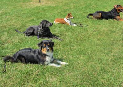 Gruppentraining in der Hundeschule