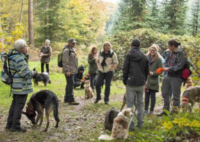 Herbst Hundewanderung mit der Hundeschule Zufriedene Hunde