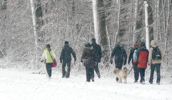 Erziehungsspaziergang mit Hund in Kleve 2017