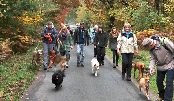 Hundewanderungen in Kleve im Reichswald, Gruppenspaziergang mit Hunden mit der Hundeschule Zufriedene Hunde