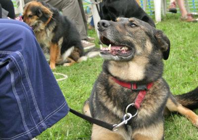 Gruppenkurse und Workshops Hundeerziehung bei Zufriedene Hunde