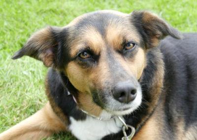 Hundeerziehung in der Hundeschule Zufriedene Hunde