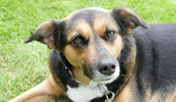 Unsere Einstellung zur Hundeerziehung