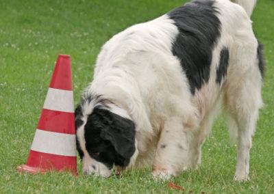 Nasenarbeit bei Zufriedene Hunde