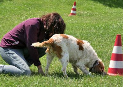 Objektsuche mit Hundehalter in der Hundeschule Zufriedene Hunde