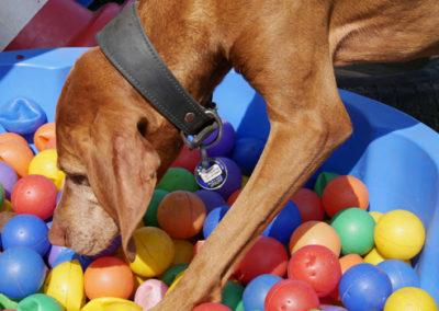 Objektsuche und Trümmersuche in der Hundeschule Zufriedene Hunde