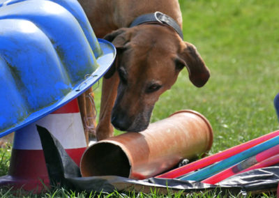 Nasenarbeit und Schnüffelspiele in der Hundeschule Zufriedene Hunde