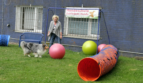 Treibballtraining in der Hundeschule Zufriedene Hunde