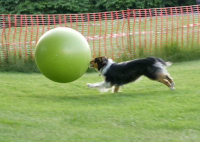 Treibball bei Zufriedene Hunde in Emmerich