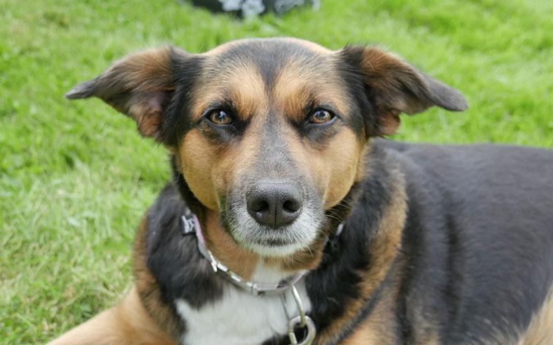 Beraung für die Anschaffung eines Hundes, ein Hund kommt ins Haus