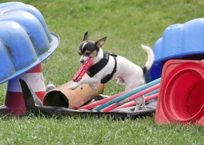 Futterbeuteltraining in der Hundeschule in Emmerich, Kleve, Rees, Kalkar