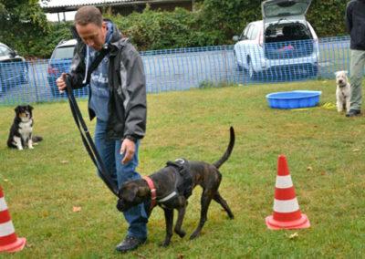 Ella übt die Leinenführigkeit bei Zufriedene Hunde