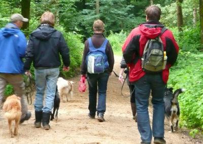 Lernspaziergang in der Hundeschule Zufriedene Hunde