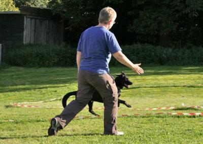 Körpersprachliches Longieren bei Zufriedene Hunde