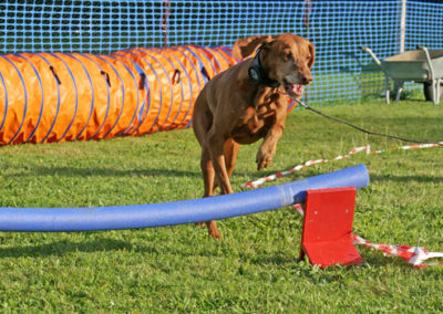 Longieren mit Hürde in der Hundeschule Zufriedene Hunde