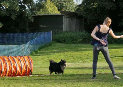 Körpersprachliches Longieren mit Hund in der Hundeschule Zufriedene Hunde