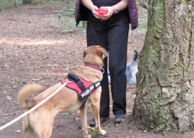 Mantrailing in Emmerich, Kleve, Rees, Kalkar Hundeschule Zufriedene Hunde