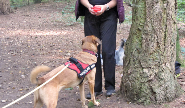 Mantrailing Bei Zufriedene Hunde