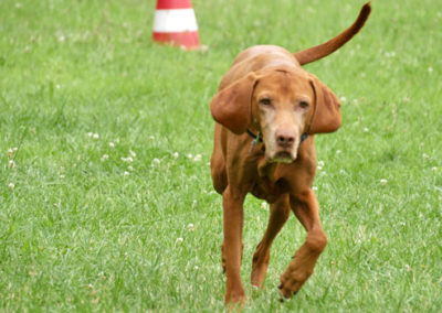 Rückruf Training der Hundeschule Zufriedene Hunde