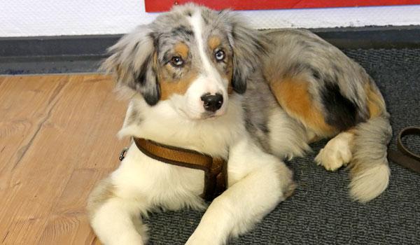 Junghundeerziehung im Einzeltraining in der Hundeschule Zufriedene Hunde