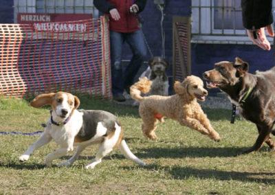 Junghundegruppe Zufriedene Hunde