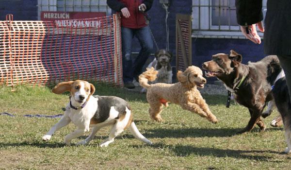Junghundeerziehung im Gruppentraining in der Hundeschule Zufriedene Hunde