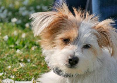 Hundetraining in der Hundeschule Gerwin Jeltsch