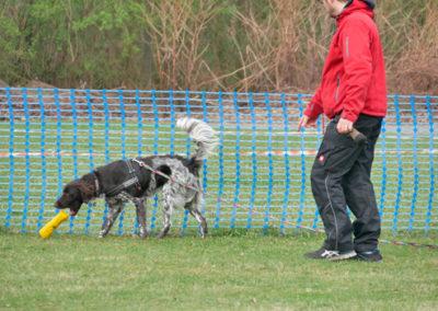 Futterbeuteltraining im Gruppenunterricht Zufriedene Hunde