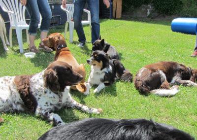 Gruppentraining Zufriedene Hunde