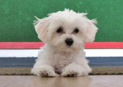 Einzeltraining Zufriedene Hunde