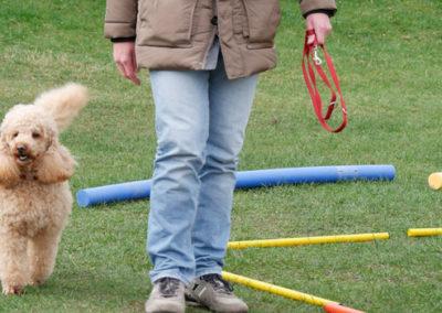 Leinenführigkeit im Gruppenunterricht Zufriedene Hunde