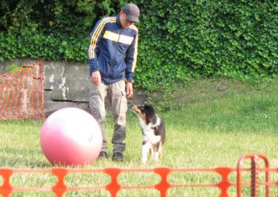 Treibballkurs Zufriedene Hunde