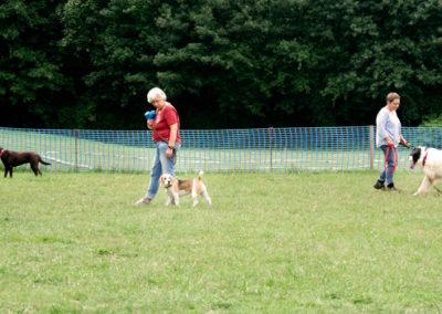 Gruppentraining in der Hundeschule Zufriedene Hunde