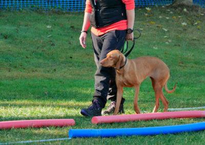 Leinenführigkeit Gruppentraining Zufriedene Hunde