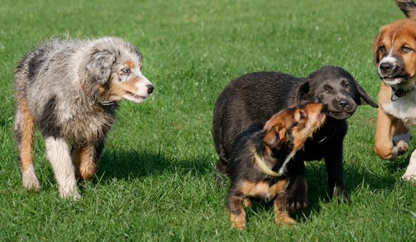 Hundeerziehung bei Zufriedene Hunde