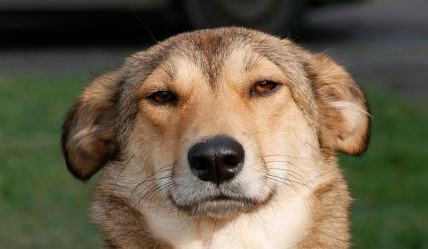 Hundeschule Zufriedene Hunde