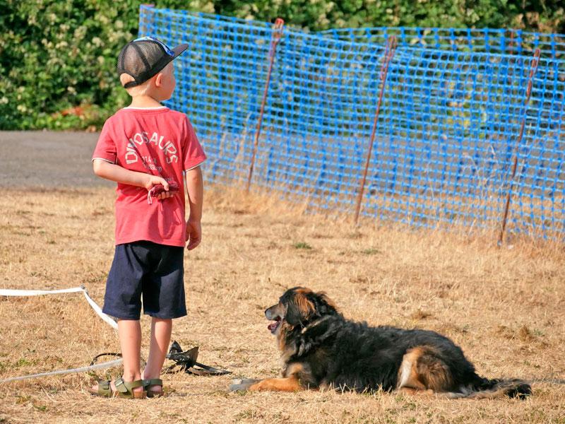 Kinder und Hunde, Beratung für Kind und Hund, Hundehaltung mit Kindern