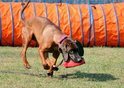 Apportieren im Gruppentraining Zufriedene Hunde