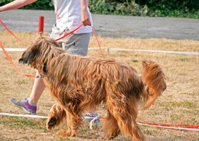 Longieren Hundeschule Zufriedene Hunde