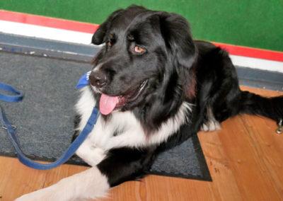 Hundeschule Zufriedene Hunde Einzeltraining